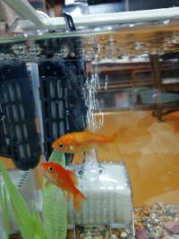 金魚の水槽にヒーターを取り付けました。 ぶくぶくに近すぎますかね?