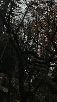 この写真の緑の光はオーブですか?? 中央のあたりです。 神社で撮ったもので、私のケータイで撮っても母のケータイで撮っても写っていました。 光の場所はバラバラでしたが、、 天気は曇りで夕方前に撮りました。  何かいい事あるでしょうか(゚ω゚)