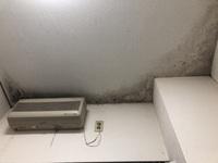 天井のこういうカビはどのようにして取れるのでしょう? 雑巾で拭いても落ちないので困ってます。