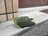 この鳥の名前は何でしょうか? 緑色のとても綺麗な鳥でした。
