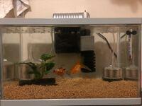 現在45センチ水槽で金魚を2匹飼っているのですが 60センチ水槽+エーハイム2213を新規で購入したので 金魚を引っ越ししようと考えてます 45センチ水槽は新たに琉金(当歳)1匹を飼育予定です  45センチ水槽は 底砂コ...