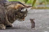 今の時代、ネズミ捕り用にネコを飼っている人はいますか?