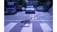 車のドライバーについて信号が赤になれば一部のドライバーを除いてある程度は止まれる能力があるにもかかわらず 信号機のない横断歩道については歩行者が渡ろうとしているにもかかわらず・後方の車に追突されそう...