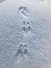 この足跡はなんの動物の足跡がわかりますか?