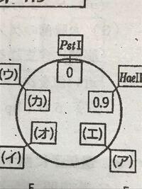 ある環状プラスミドを3種類の制限酵素で切断したとき、下表のような断片長(kbp=1000塩基対)の直鎖状の核酸が得られた。 Pst 5.0 Hae 2.0、3.0 EcoR 2.4、2.6 Pst+Hae 0.9、2.0、2.1 EcoR+Pst 1.0、1.6、2.4 Hae...