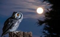フクロウは夜でも視えるのに、鶏はなぜ夜は全然見えないのですか? 同じ鳥類でも。  鳥目というと、鶏などのように、人間がまだ周囲を見えているくらいの薄暗さでも全然見えなくなってしまい。 じっとしている...
