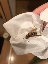 家の中に飛んでいた蜂何ですが 何蜂さんですか? それと巣が近くにあるんですかね?