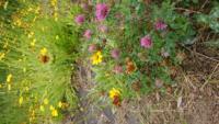 黄色い花と紫の花の名前を教えてください!