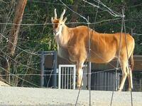天王寺動物園にいたこの動物はなんとゆう名前なんでしょうか