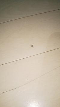 家に最近蟻がいます ゴキブリスプレーでは効果なしですか?