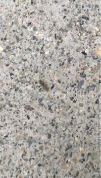 家回りのコンクリートに何匹もいます。 2ミリくらいで、グレー色です。  種類、退治方法を教えてください。