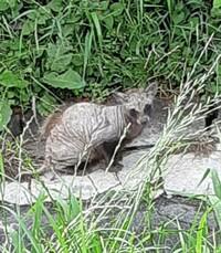 この動物は何ですか?河川敷で見かけました。