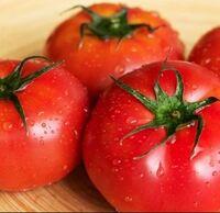 トマトの保存方法について伺います。 キューピーのホームページには、 「袋に入れるかラップをして、冷蔵庫の野菜室で保存しましょう」 と紹介されているのですが、我が家の冷蔵庫には野菜室がありません。  ...