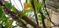 大量に黒いブツブツが沸いてるのですが、これは植物の病気ですか?それともなにかの虫でしょうか?