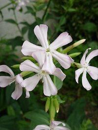 通り道でよく見る花ですが、名前がわかりません。 この花の名前を教えてください