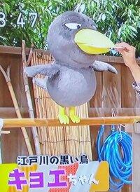 「吉岡聖恵ちゃん」の正体は、   「キョエちゃん」だったんですか?   いきものがかりの吉岡聖恵ちゃんの正体は   チコちゃんに叱られるのキョエちゃんだったんですか?