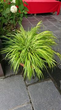 もう一つこの画像の稲科の植物の名前もお願いします。