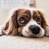 愛玩動物(犬・猫)その他の幸せって何でしょう?もし、みなさんが愛玩動物(犬・猫)ならば、どんな飼い主に飼育されたいですか?それとも人間には飼育されずに自力で生きていきたいですか?