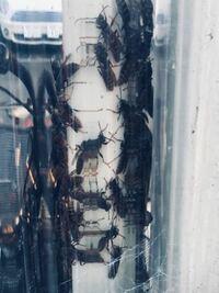 駐輪場に蜂の巣ができてたんですけど、なんの種類の蜂か分かりますか?