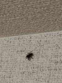 この蜘蛛なんて名前ですか? 画質が悪くて申し訳ありません (怖くて近寄れない) 合宿で使う寮にたくさんわいて困ってます。 御回答よろしくお願いします。