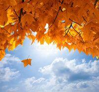 『SKY』・『空』ソングと言えば?  こんな空が美しい季節になりつつありまする。