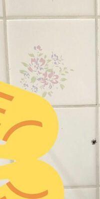 蜘蛛が怖いです助けてください これは何蜘蛛ですか どうやって追い出したらいいですか 殺してはダメだと旦那に言われてるので放置してますがかなり怖いしもう無理です どう追い出せばいいですか 助けてください