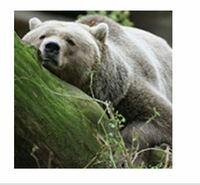 ヤフー知恵袋の動物カテゴリーのアイコンに使われるこのクマの写真の元ってどんな写真ですか?