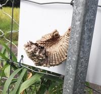 蜂の巣のようなものを見つけたのですが、これは何の巣でしょうか?既に虫は住み着いていませんでしたが、一体何が住み着いていたのか気になりますので、回答よろしくお願いします。