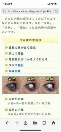 愛犬の9歳のトイプードルの目が少し白くに濁っているような感じで、調べてみると下の写真の未熟の写真になっているのですが、早いうちに病院に行くべきですか?