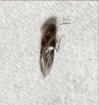 この虫はなんですか? 体長5ミリ