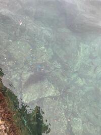 サビキ釣りをしてたら寄ってきました 初めて見たとても綺麗な1cmくらいの魚  これはどんな魚ですか?  11月1日、福井県常神半島の最先端です