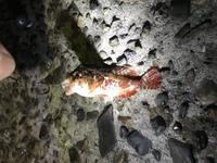 この魚はなんですか? 背びれで指を刺してしまい、激痛なのですが、大丈夫でしょうか。