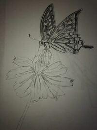 蝶々を書いてみました。どうですか。アゲハ蝶の模様は難しかったです。結構下手ですが初めて絵を書いたレベルなので、優しめなアドバイスよろしくお願いします!