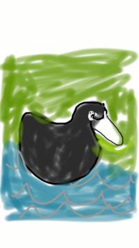 水鳥で体は黒くくちばしは白いやつはなんという名前ですか? なんとなくこんなの