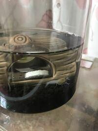 ザリガニについての質問です。 今ザリガニの赤ちゃんを飼っているのですが、ザリガニを初めて飼うので調べながらの飼育です。 飼育環境なのですが、1匹でプラスチックの容器に100均のソイル、シェルター、水草を5センチほどに切って1本、エアレーションの代わりに酸素の出る石を入れて、この容器のまま爬虫類用に30度に設定してある温室に入れています。室内でも私の部屋は温度差が結構出てしまうのでこちらに入れ...