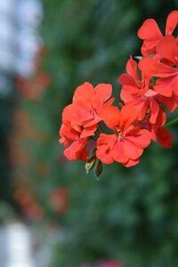 花に詳しい方にお伺いします。 この花の名前は何でしょうか??