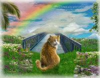 虹の橋というのは、自分が死んでから亡くなったペットとそこで会うという話ですか?