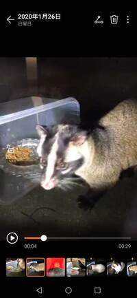 住宅街にこんな動物が来ましたが、これは何の動物ですか?