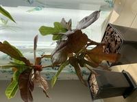 写真の植物は何ですか? 知人の家でたまたま観た観葉植物です。