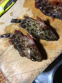 カサゴ(アラカブ)の種類 この2匹、片方は赤くてエリマキみたいな柄で、もう片方はいわゆる普通の柄なのですが、どちらも同じ種類のカサゴなのでしょうか?  また、俗に「沖アラカブ」などと呼ばれる、沖で釣れる...