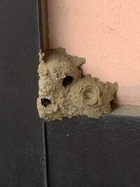 ベランダに蜂の巣? 今気づきましたが、いつのまにかベランダに虫の巣みたいなものができてました。 これは蜂の巣ですか?  気持ち悪いです。 どうやって取り除けばいいですか?