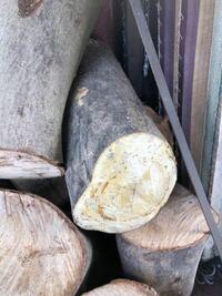 樹木に詳しい方、教えてください。 写真中央の木、樫に似てますが、断面が黄色く、樫ではありません。 斧でとても割りやすいです。 広葉樹と思います、、 何の木でしょうか? 欅でもありません、、