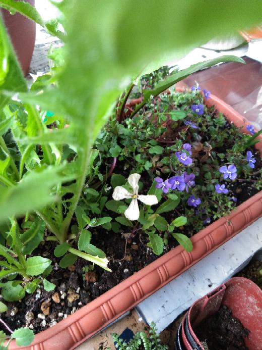 このphotoの白いflower. これは何という植物なのですか? すばらしい造形の花ですね!
