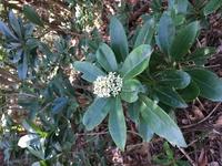 登山中に見つけた花なのですが、名前は何というのでしょうか?