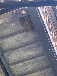 ミツバチって巣を作る前に群がるのですか? 今日の朝出かけて1時間くらいで帰宅したら家の外にミツバチが大量に飛んでいて雨が当たらないとこに巣を作ってました。 写真つけます。  それで駆除をお願いしたら巣じゃなくて群がってるだけとのこと。 なぜ巣もないのにこんなに群がるのでしょうか? この大群はどこにいていきなりこんなに集まるのですか?元々群れでいたのか、それとも前からここに少しずついたのでしょ...