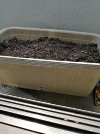 このプランターでブロッコリー2苗育てられますか?