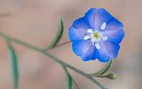 高齢者、老人に、お伺い致します。 .  この花の名前を教えてください。