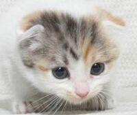 飼い猫の事なのですが、新入り猫をもう1匹 飼うか迷っていますが、猫自身は、飼い主と 猫同士とどちらが良いと思ってると思いますか?
