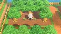 の 木 森 ない 育た なる あつ かね 【あつ森】木が育つ条件・効率の良い植え方 たのしいサイト
