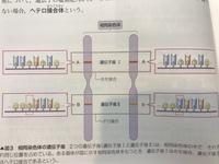 高校生物の教科書に「ある遺伝子座に存在し得る遺伝子として互いに異なるものが複数あるとき、これらを対立遺伝子という」とありますが、単語の理解がいまいちです。 この図の場合、Bとbが対立 遺伝子ということ...